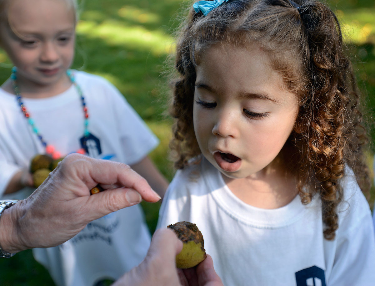 A student inspects the inside of a walnut with help from her teacher, Kathy Conezio Sept. 20 at St. Louis School in Pittsford.